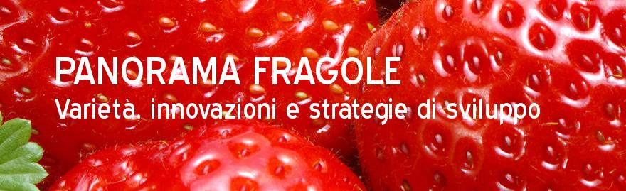 fragola_sito_oi